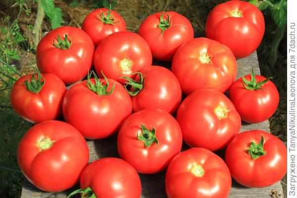 свои томаты в 2017