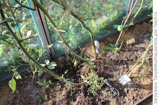 1 растение удалено