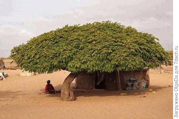дом под деревом
