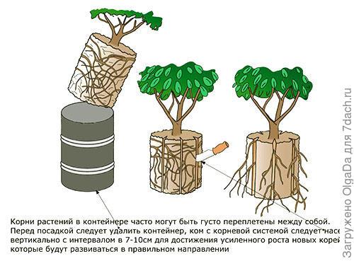 фотография взята с сайта  http://www.5-nt.ru