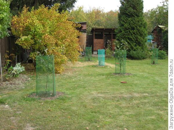 Молодые деревца в сетке от зайцев