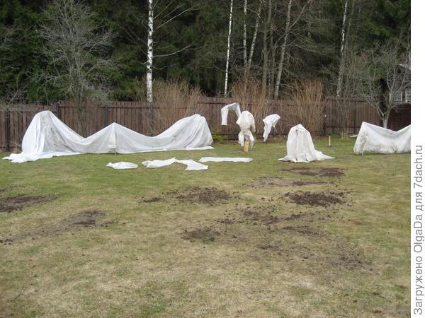 Привожу газон после зимы в порядок