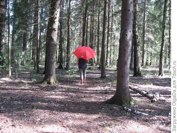 Оля в лесу