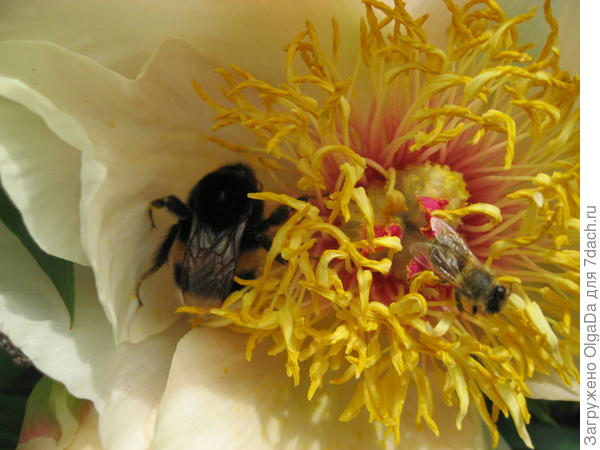 Цветок и букашки