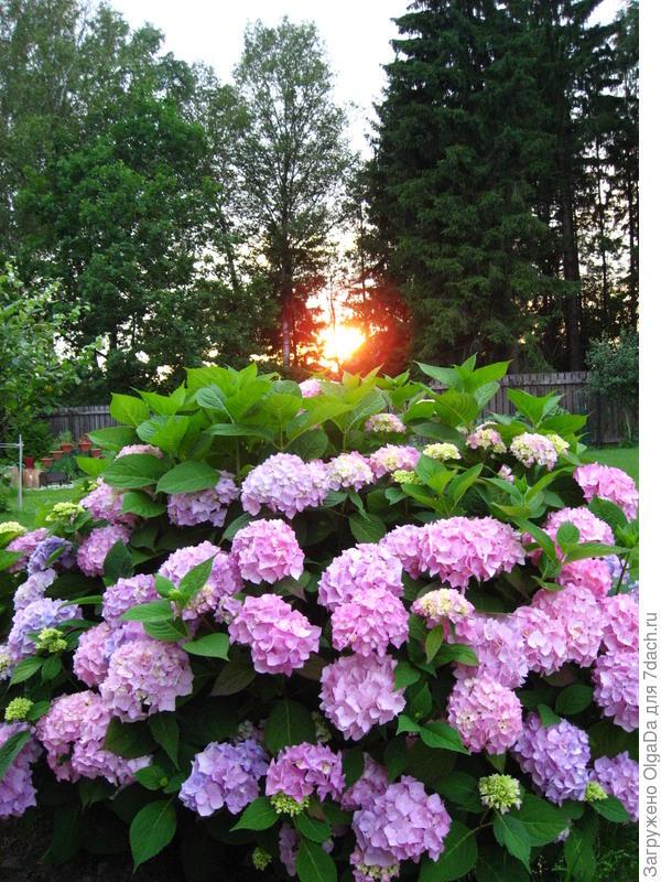 Пока суть да дело, наступил теплый вечер. Скоро «солнышко скроется, муравейник закроется…»