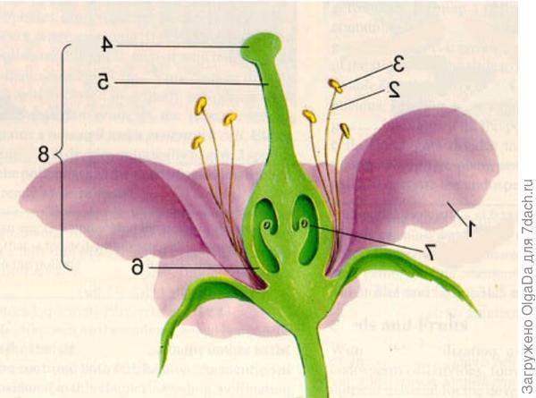 Строение цветка.