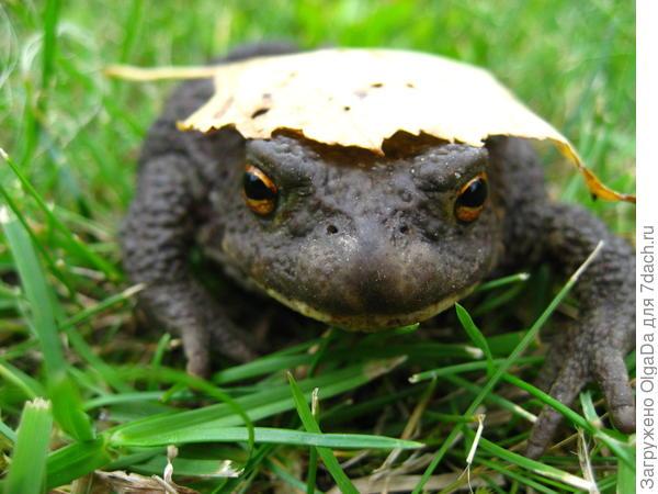 Просто жаба... Осень, однако..