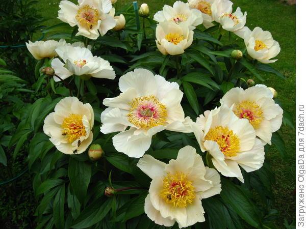 Букашки в каждом цветке