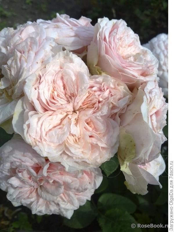 четыре сектора – признак квартированного цветка