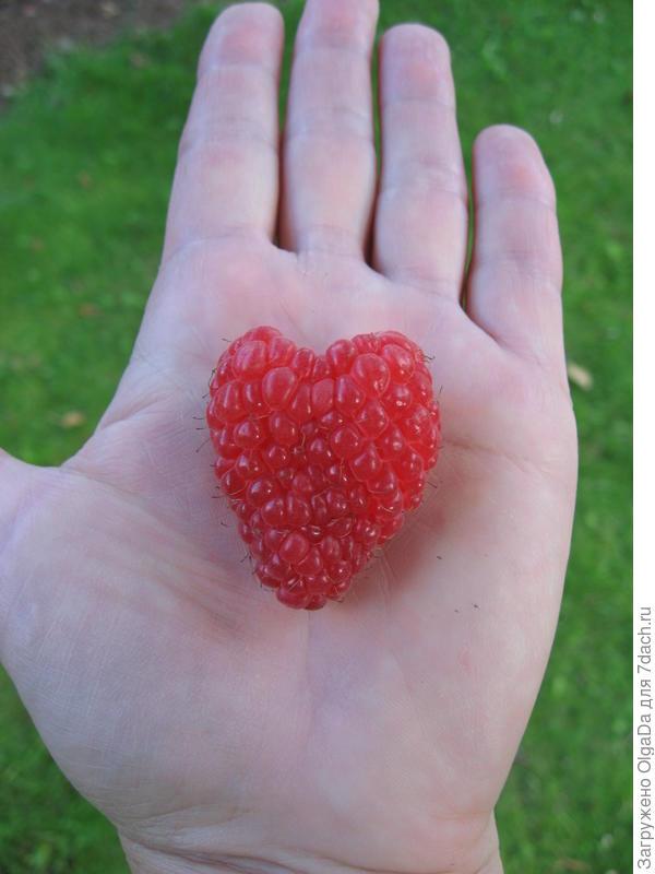 У Патриции бывают сдвоенные ягоды