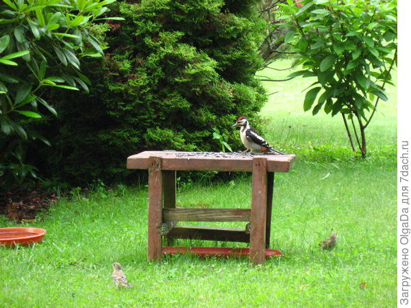 Птички на даче