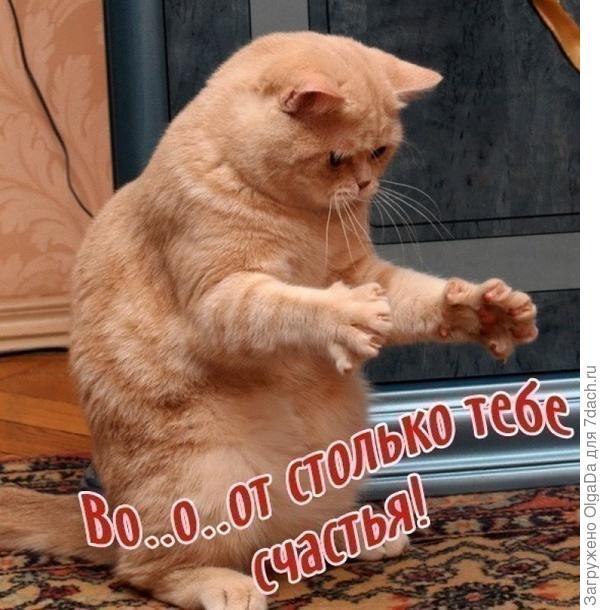 Мартовский котик.