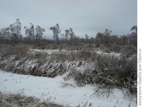 Болотце зимой