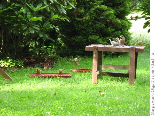 Птенец задрал хвост и трепещет крылышками.