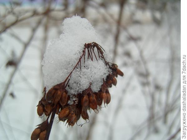 зимнее растение