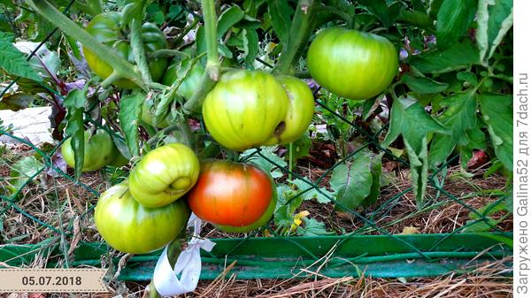 Вот здесь немного видно свёклу в помидорах