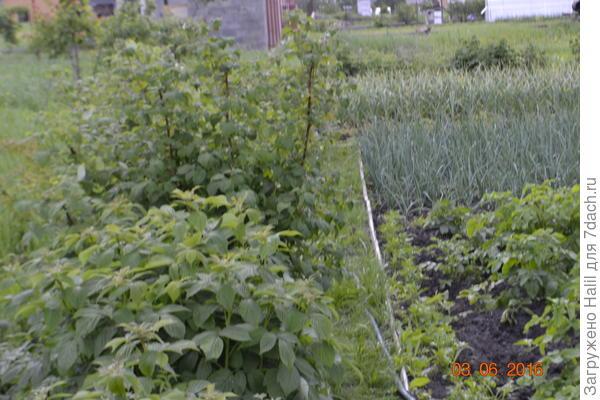 Вот земляная,внутри растет газоная трава,дорожка вдоль малины,хорошо видно деревянный бордюр.