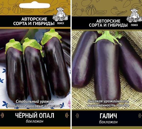 Баклажаны сортов Черный опал и Галич