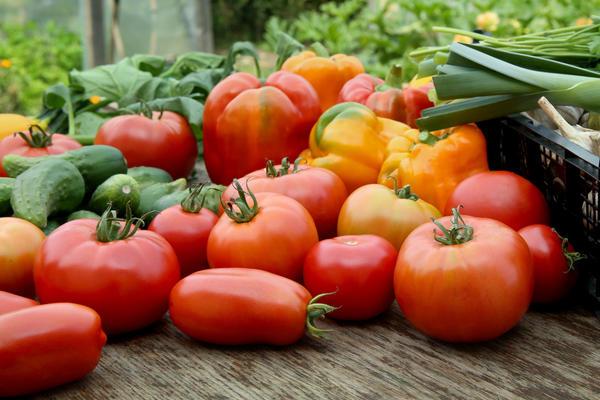 Сейчас самое лучшее время для покупки семян на следующий сезон