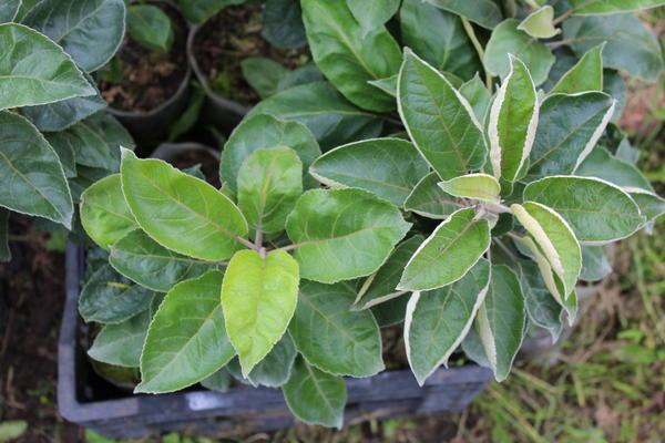 В первую очередь растение должно выглядеть здоровым