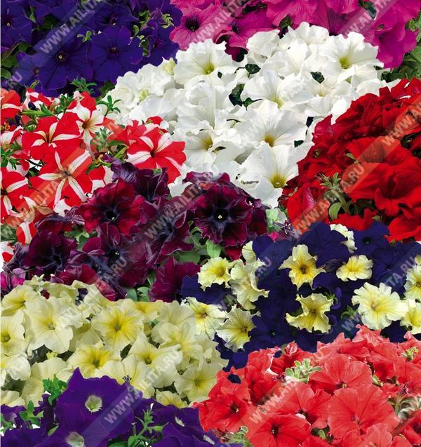 Когда трудно подобрать нужные слова, на помощь приходят цветы
