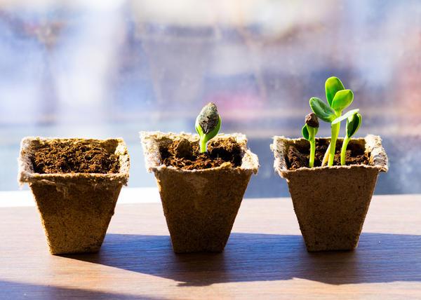 На всхожесть семян влияет много факторов
