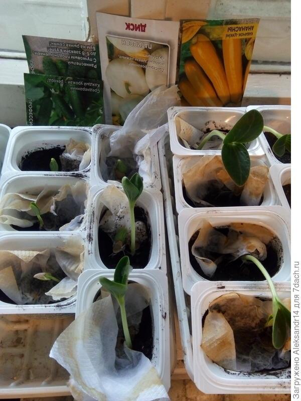 Тестирование семян тыквенных культур разных сортов и производителей