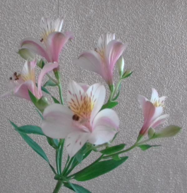 Что это за красивый цветок?
