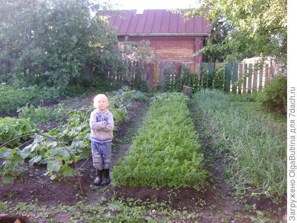 Огород - конец июня
