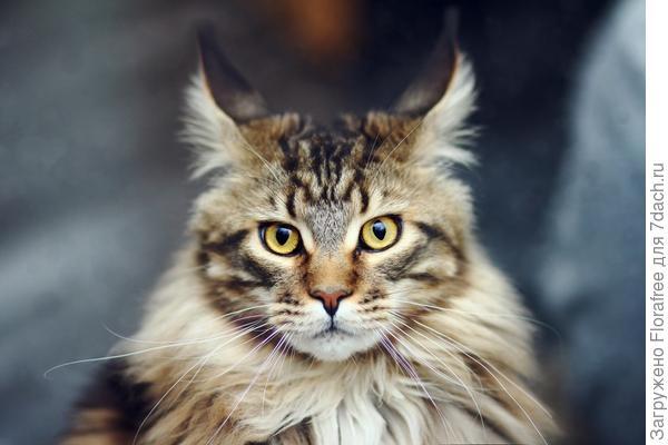 кошка против летучих мышей