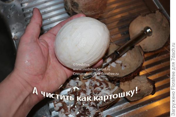 кокос почистил как картошку