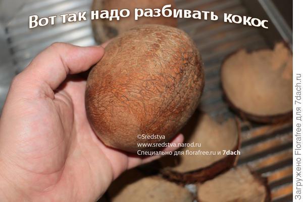 как правильно разбить кокос
