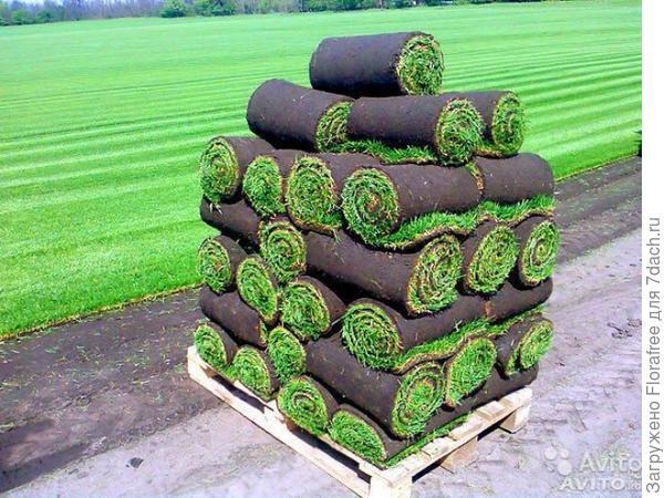 трава в рулонах