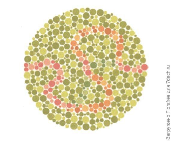нарисовать таким образом, разными цветами и серым например червяков и если ежик захочет съесть всех любого цвета  - значит не различает цветов ))