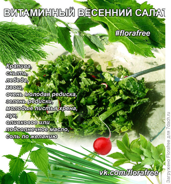 Свежий наиполезнейший и очень вкусный салат из окружающих нас растений!