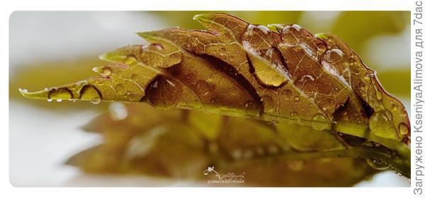 Молодой листочек