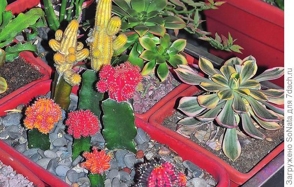 Растения пустынь могут отличаться удивительным разнообразием