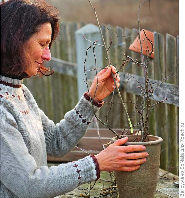 Поставьте ветки в вазу и налейте теплой воды