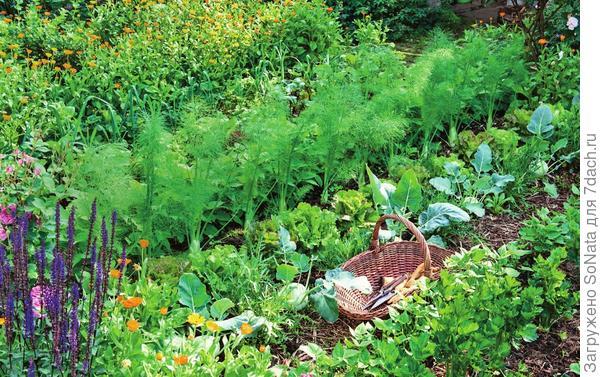 Красивое и практичное решение для грядки — чередовать растения по габаритам.