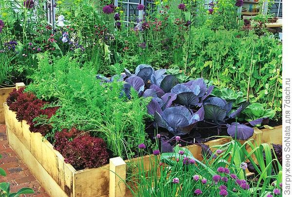Капуста и морковь отлично растут рядом с горохом, который обогащает почву азотом.