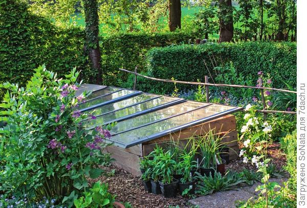 «Домик» для растений можно сколотить из досок и накрыть старыми оконными рамами