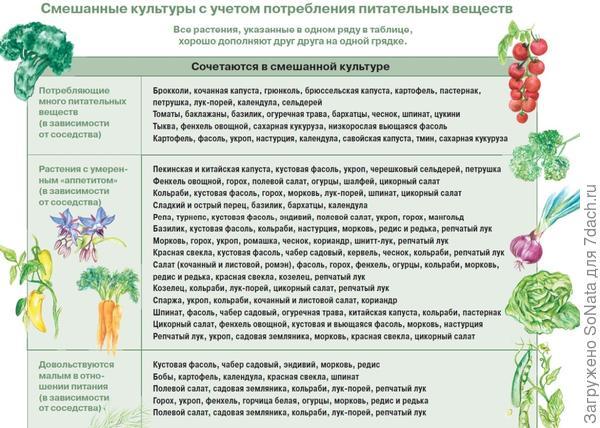 Смешанные культуры с учетом потребления питательных веществ.