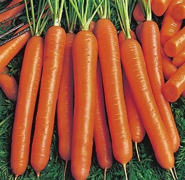 Морковь 'Almaro'