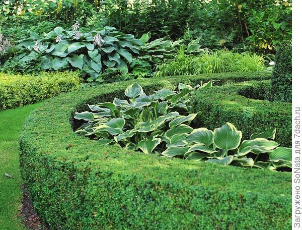«Многослойный» бордюр — лишь один из оригинальных способов использования хост в современном саду.