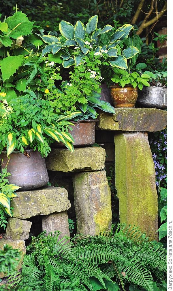 Вместительный горшок — один из возможных «домиков» для хосты, но «заселять» в него лучше растения низкорослых и компактных сортов.