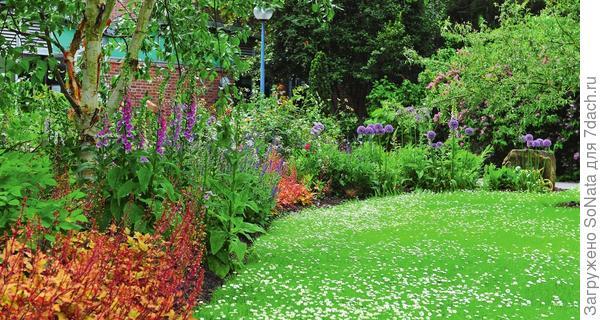 Посевной газон требует кропотливой подготовки и правильного ухода.