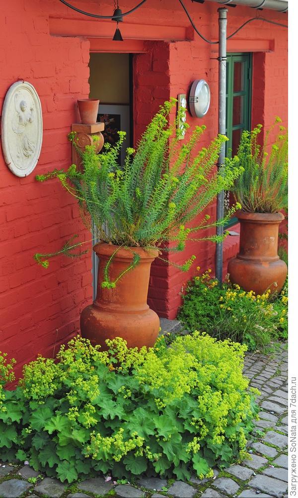 В гигантские вазоны на лето можно высадить небольшие кустарники.