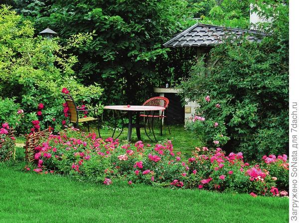 Плетистая роза 'Pink Perpetue' отличается долгим цветением (с июля до морозов) и тонким ароматом зеленых яблок.