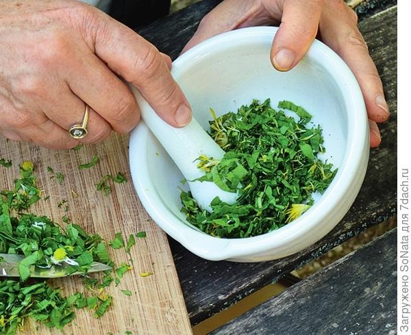 Разотрите 3 столовые ложки травы в ступке до пюреобразного состояния.