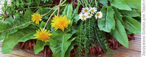 Дикорастущие травы помогут организму проснуться, ожить и простимулируют обменные процессы.
